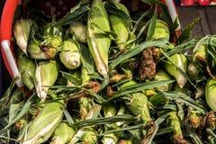 Pile des épis verts de blé avec des cosses et de la soie dans le panier rouge photo stock