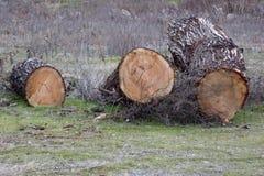 pile des arbres réduits images stock