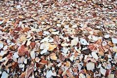 Pile des coquillages cassés et jetés Image libre de droits