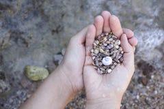 Pile des coquillages dans des paumes photo libre de droits