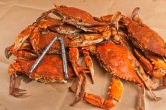 Pile des crabes bleus cuits et assaisonnés à la vapeur de chesapeake colossal photographie stock libre de droits