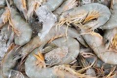 Pile des crevettes fraîches en vente au détail Photographie stock libre de droits