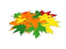 Pile des feuilles d'érable Image stock