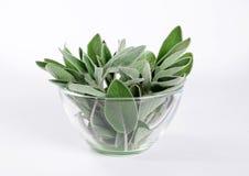 Pile des feuilles de sauge dans le bol en verre rond Images stock