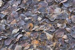 Pile des feuilles givrées d'automne Photo stock