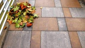 Pile des feuilles jaunes d'érable Photo stock