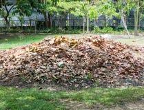 Pile des feuilles sèches Photo libre de droits