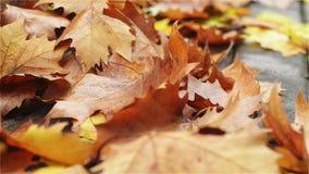 Pile des feuilles tombées sur un trottoir banque de vidéos
