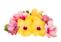 Pile des fleurs de ketmie Image libre de droits