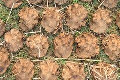 Pile des gâteaux secs de bouse de vache Photo libre de droits