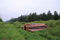 Pile des identifiez-vous l'été de forêt nuageux images libres de droits