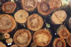 Pile des identifiez-vous la forêt photographie stock