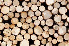 Pile des joncteurs réseau d'arbre Photos stock