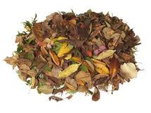 Pile des feuilles d'automne Photos libres de droits