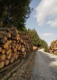 Pile des logarithmes naturels frais sciés Photographie stock libre de droits