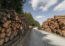 Pile des logarithmes naturels frais sciés Photo libre de droits