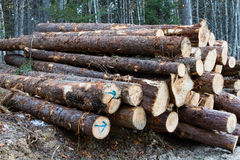 Pile des logs photos stock