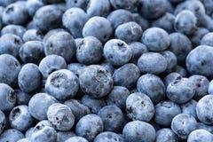 Pile des myrtilles bleu-foncé image stock