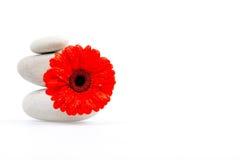 Pile des pierres et de la fleur rouge photographie stock