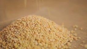 Pile des pois fendus secs organiques sur le tissu de sac, produit sain de nutrition, nourriture clips vidéos