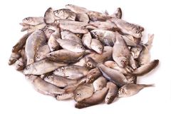 Pile des poissons frais Images libres de droits