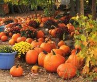 Pile des potirons oranges avec des fleurs photographie stock