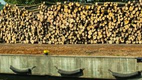 Pile des rondins au port prêt pour charger aux bateaux Photo libre de droits