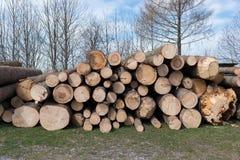 Pile des rondins en bois, arbres empilés ensemble Photographie stock