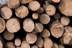Pile des rondins en bois, arbres empilés ensemble Images libres de droits
