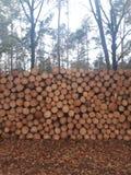 Pile des rondins se situant dans la forêt photographie stock