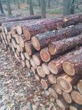 Pile des rondins se situant dans la forêt photo libre de droits