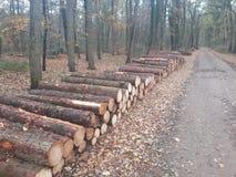 Pile des rondins se situant dans la forêt images stock