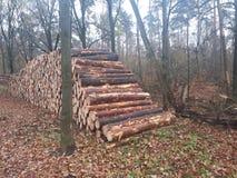 Pile des rondins se situant dans la forêt image stock