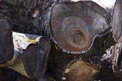 Pile des tronçons d'arbre, structure en bois Les lances des arbres énormes sont empilées dans une scierie Notation légère de fond images stock
