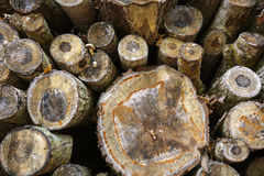 Pile des troncs d'arbre abattus Photographie stock libre de droits