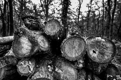 Pile des troncs en bois Photo stock