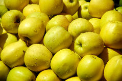A pile of dewily yellow apples Royalty Free Stock Image