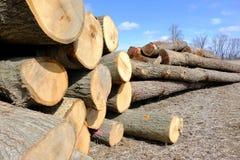 Pile di alberi che attendono che elaborano Immagini Stock