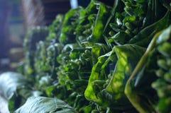 Pile di foglie mature del tabacco immagine stock libera da diritti
