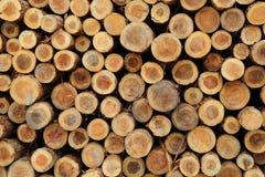 Pile di legname ai bacini Immagini Stock