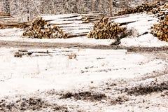 Pile di legname nella scena di inverno Immagini Stock Libere da Diritti