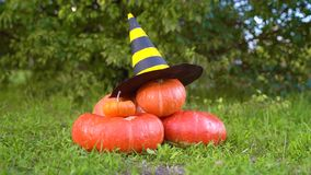 Pile of different sized orange pumpkins in the market lies on green grass on a background of trees.  Halloween orange pumpkin with. Witch hat. Thanksgiving Day
