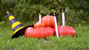 Pile of different sized orange pumpkins in the market lies on green grass on a background of trees.  Halloween orange pumpkin with. Witch hat. female hand