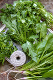 A pile of different types of fresh herbs. Parsley, cilantro, spinach, arugula Royalty Free Stock Photography