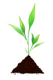 Pile of dirt and growing plant Stock Photos
