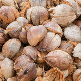 Pile of discarded coconut husk in coconut farm, Th Royalty Free Stock Photo