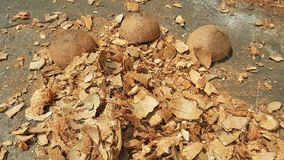 Pile of discarded coconut husks Royalty Free Stock Image
