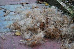 A pile of dog fur after grooming. A pile of dog fur border terrier after grooming Royalty Free Stock Photography