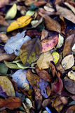 A Pile of Dried Autumn Leaves Stock Photo