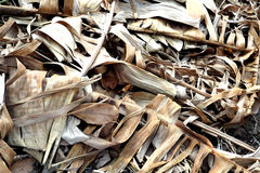 A pile of dried banana leaves Stock Image